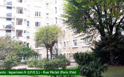 CLCV Paris soutient les locataires – Paris : les locataires de Saint-Lambert ne veulent pas perdre leurs arbres